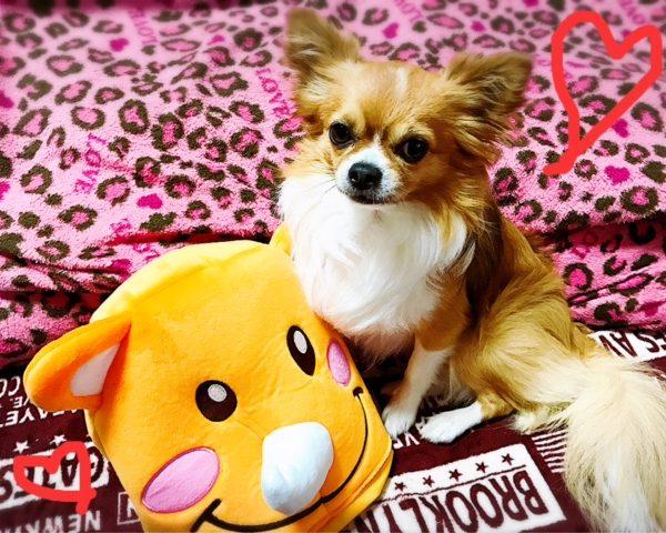 【愛犬ココっちとツノっち】