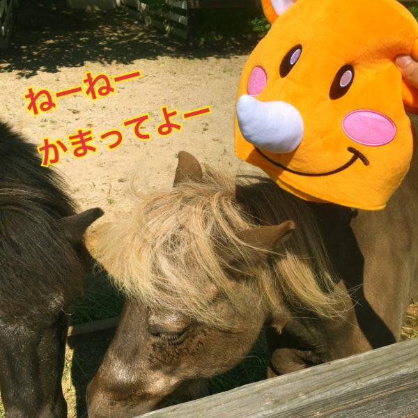 全然ぼくに興味ないのね! ねーねーかまってよー❤️ はるばる遊びにきたんだよ❤️ 北海道ゎでっかいどー❤️