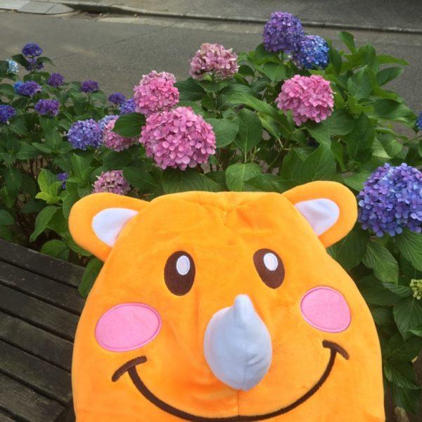 整いました!色サイが美しい紫陽花をサイ培したいサイ、ツノっちです。