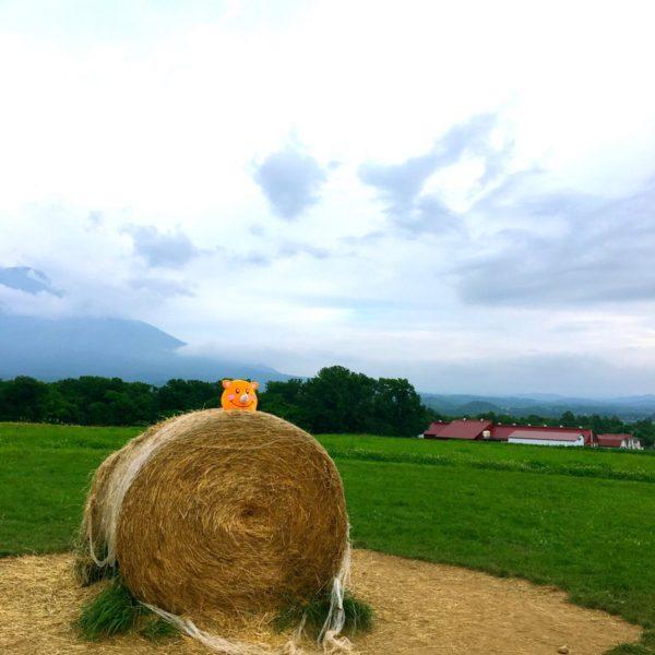 眺め良さそうなところからこんにちはです❤️ 後ろにゎ羊蹄山⛰が💕 お天気曇って、あんまりよく見えないけど、お天気の日ゎめちゃくちゃ綺麗ですよ❤️ K崎さん、今度北海道に遊びに来て下さい♪(๑ᴖ◡ᴖ๑)♪