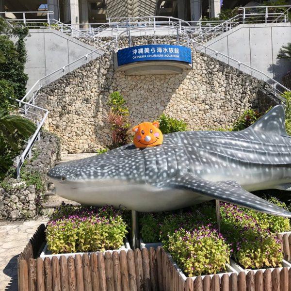 ツノっちと美ら海水族館